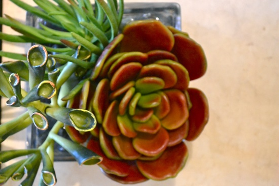Gorgeous Greens: Succulents