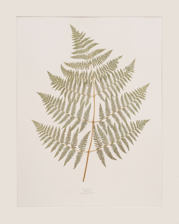 Lauren Lachance pressed Louisiana fern // SummerHouse | Ridgeland, MS