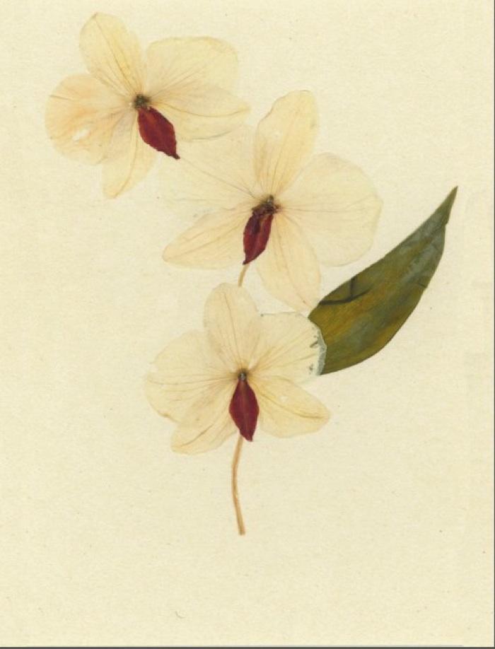 Lauren Lachance pressed botanical // SummerHouse   Ridgeland, MS