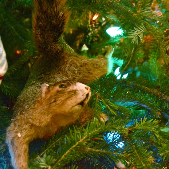 Christmas Vacation Squirrel.Cousin Eddie Just Keeps Getting Better The Hive